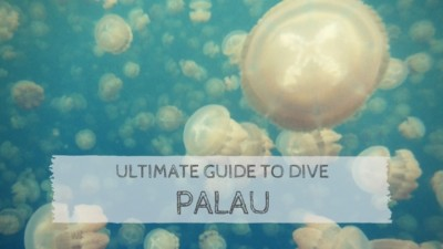 Ultimate Guide to Dive Palau