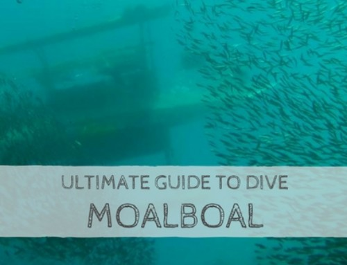 Ultimate Guide to Dive Moalboal