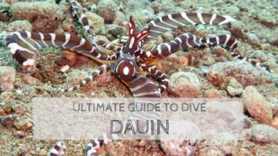 Ultimate Guide to Dive Dauin