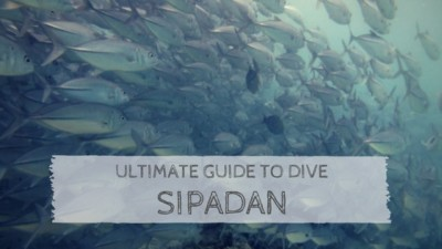 Ultimate Guide to Dive Sipadan
