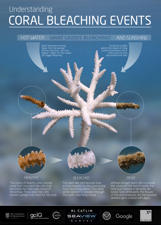 Why do Coral Bleach