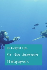 Tips for New Underwater Photographers Pinterest