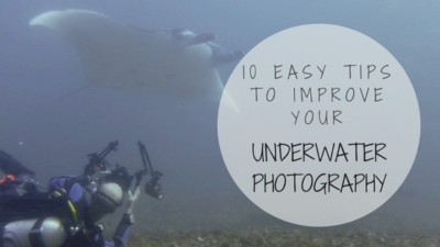10 Easy Tips to Improve your Underwater Photography