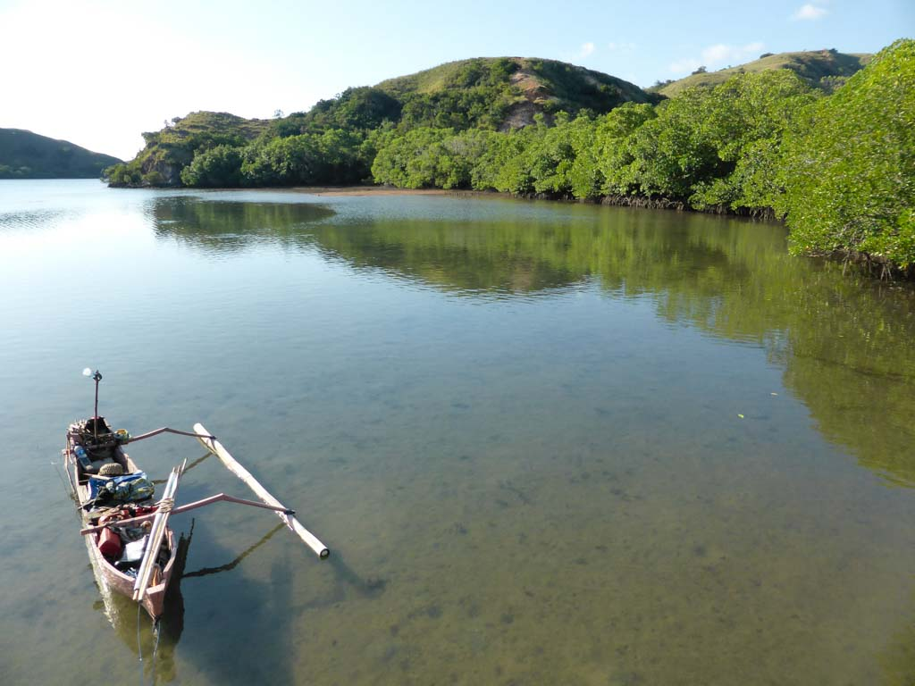 boat and mangroves
