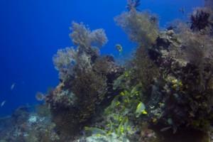reef scenery