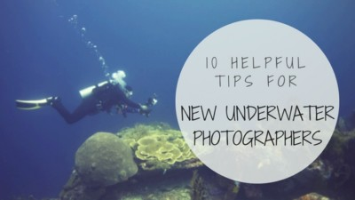 tips for new underwater photographer