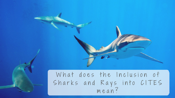 What does the Inclusion of Sharks and Rays into CITES mean?