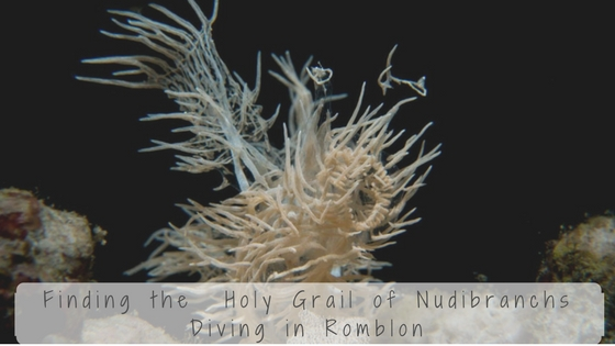 diving in romblon