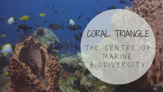 Coral Triangle - The Centre of Marine Biodiversity