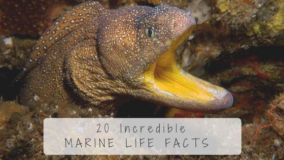 Marine Life Facts