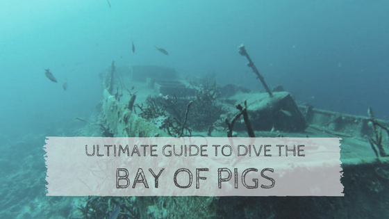Ultimate Guide to Dive the Bay of Pigs