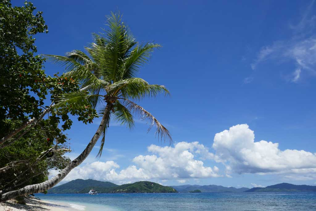 White Beach and Palmtree