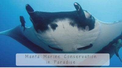 manta marine conservation project