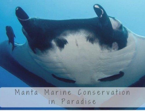 Manta Marine Conservation in Paradise