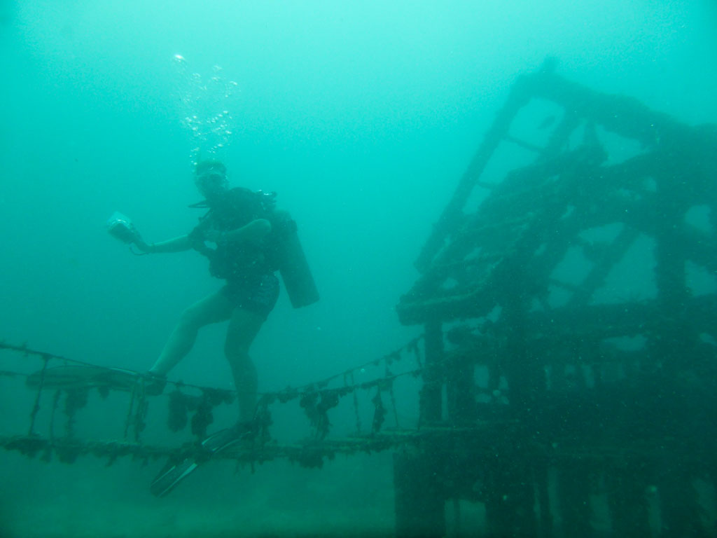 fun with artificial reef