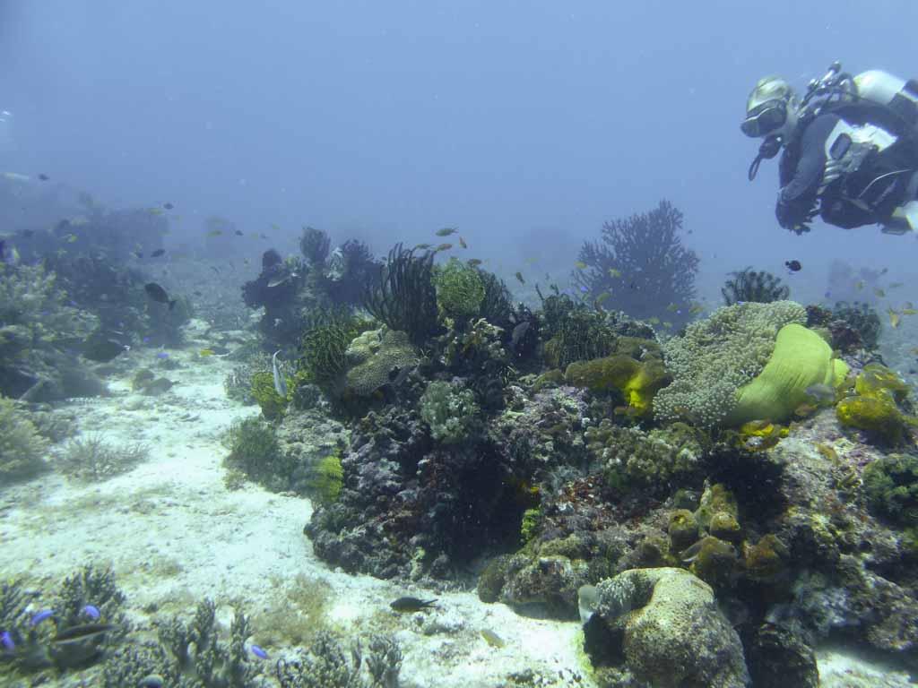 coral reef balicasag