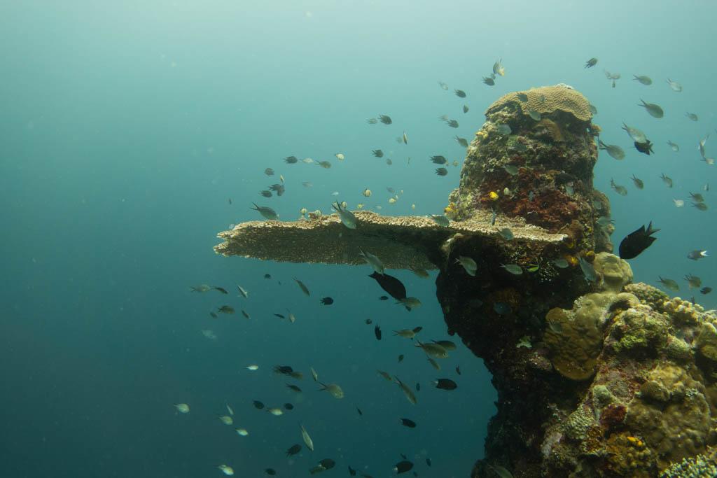 coral bunaken