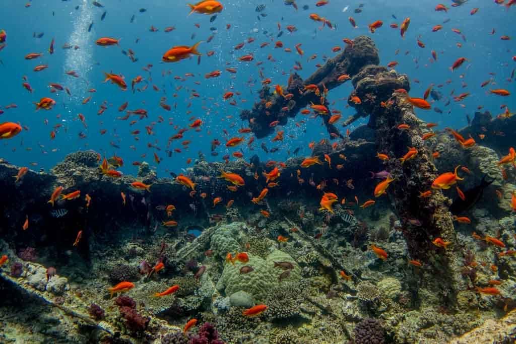 Artificial Coral Reef - Wreck