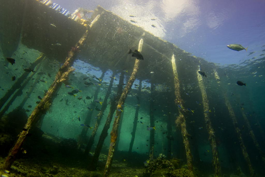 Artificial Coral Reefs - Jetty