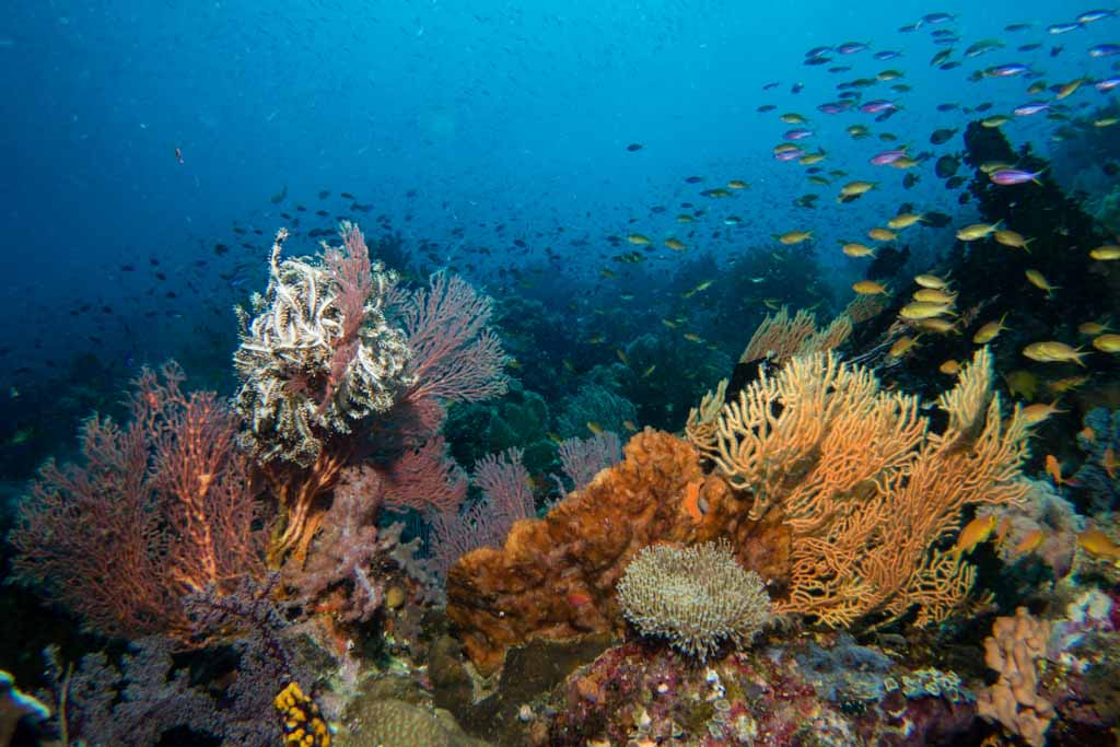 best coral reef diving