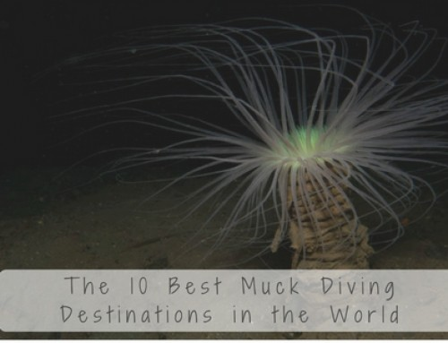 The 10 Best Muck Diving Destinations in the World