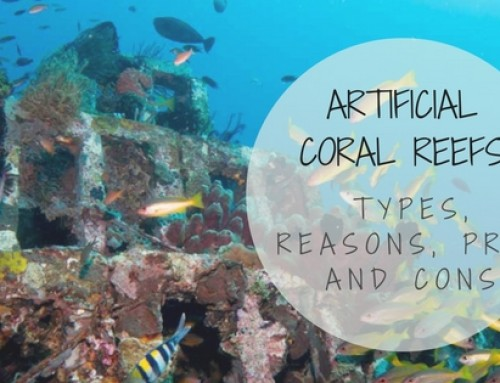 Artificial Coral Reefs – Types, Reasons, Pros and Cons