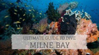 Dive Milne Bay