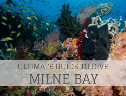 Ultimate Guide to Dive Milne Bay