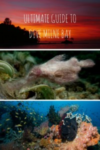 Dive Milne Bay Pinterest