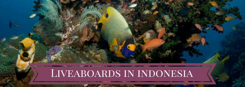 liveaboards in indonesia