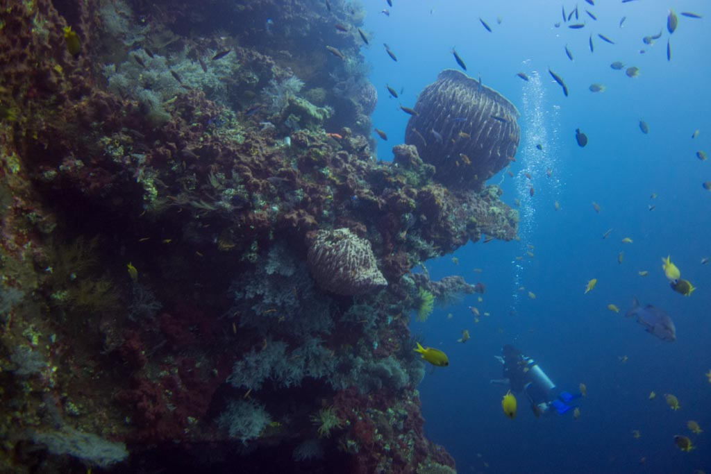 Ultimate Guide to Dive Bali - USAT Liberty