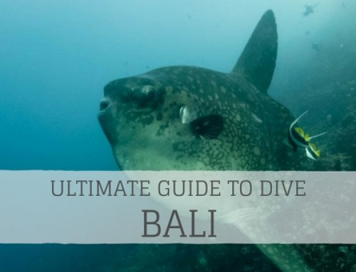 Ultimate Guide to Dive Bali