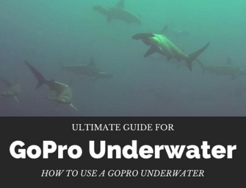 Ultimate Guide for GoPro Underwater – How to use a GoPro underwater