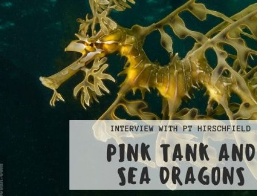 Pink Tank and Sea Dragons – Interview with PT Hirschfield