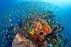 st lucia scuba diving
